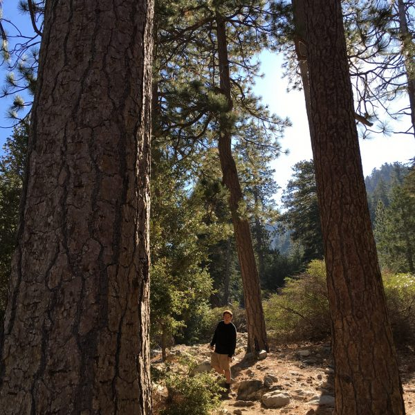 Pines (002)
