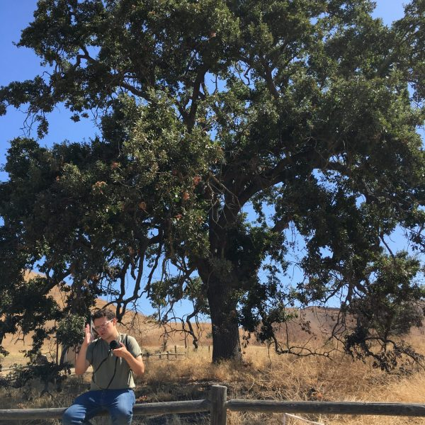 Oak (002)
